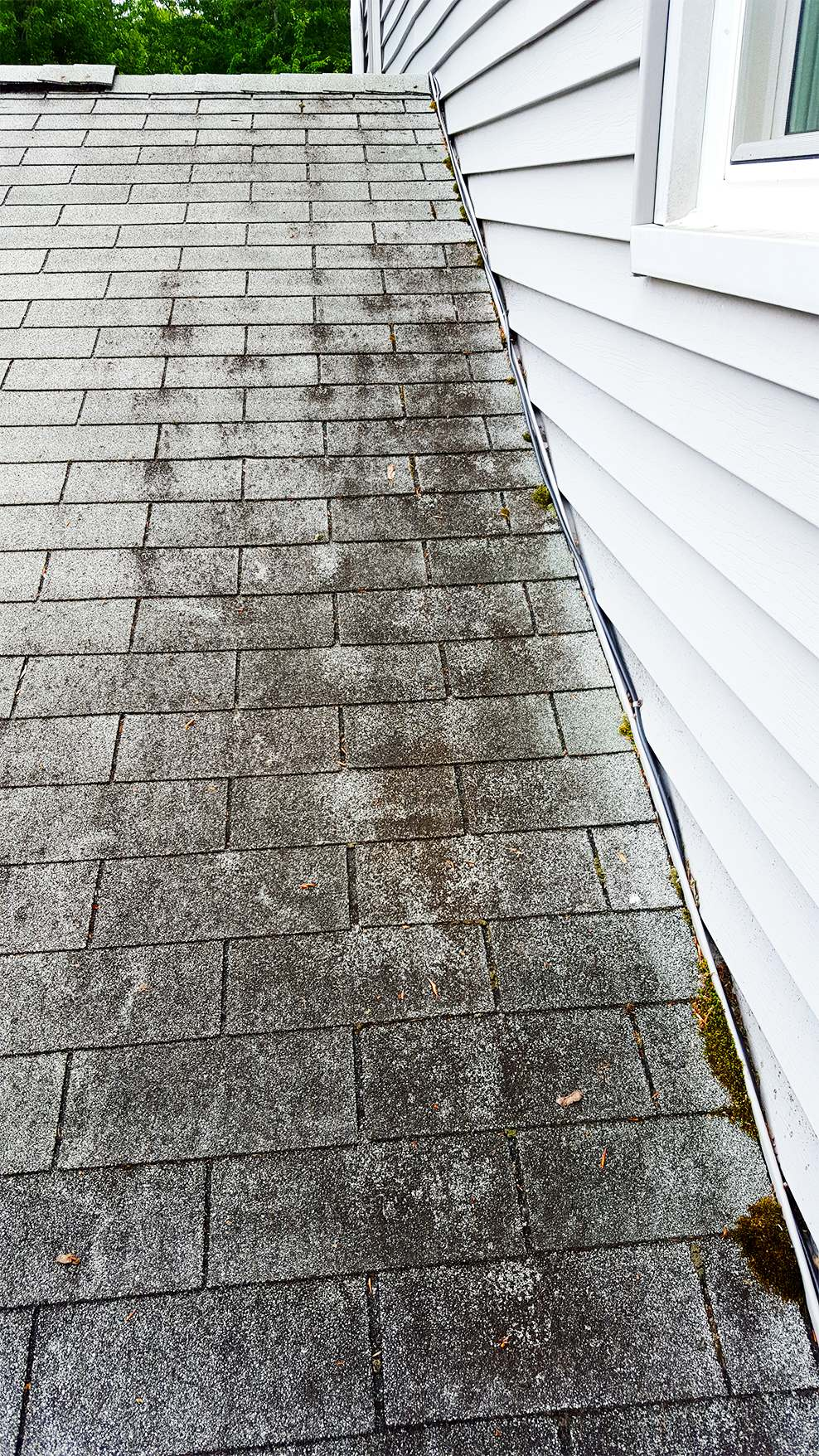 how to get rid of moss and lichen on roof