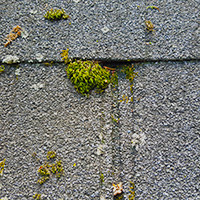 Moss acumulated on the roof