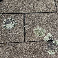 20150731 110250 lichen damage to roof small