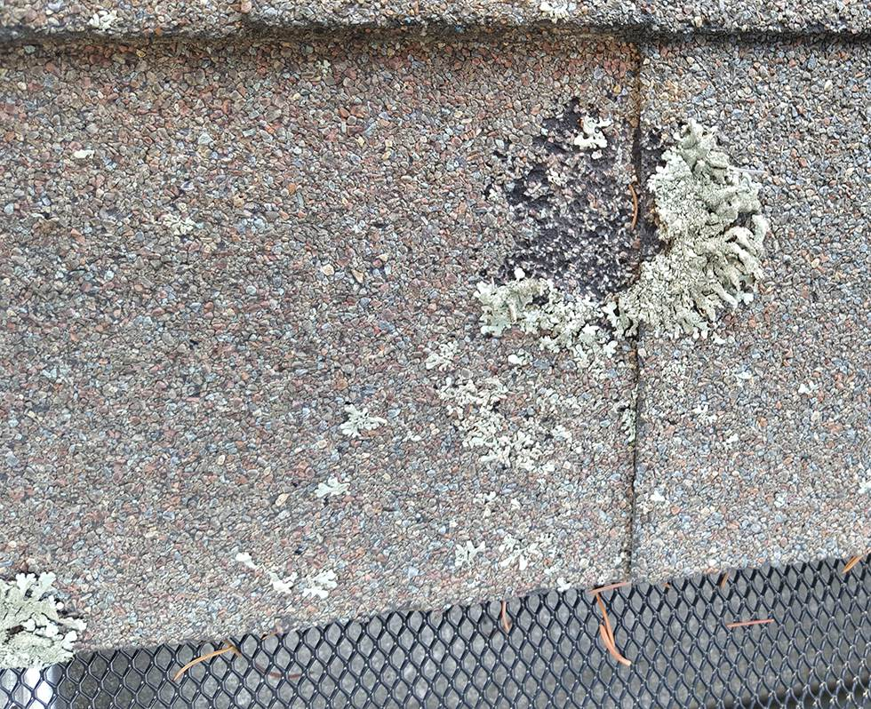 Lichen On A Roof Removed By Killing It So No Damage Done