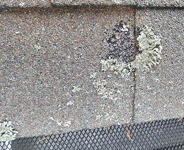 20150831 161407 mature lichen pulled grit off small