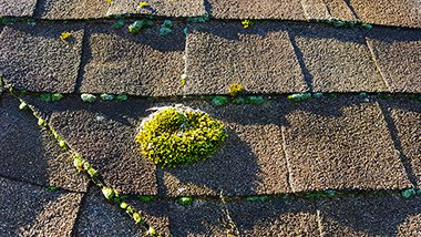 20150918 084533 mature moss rightt side up small